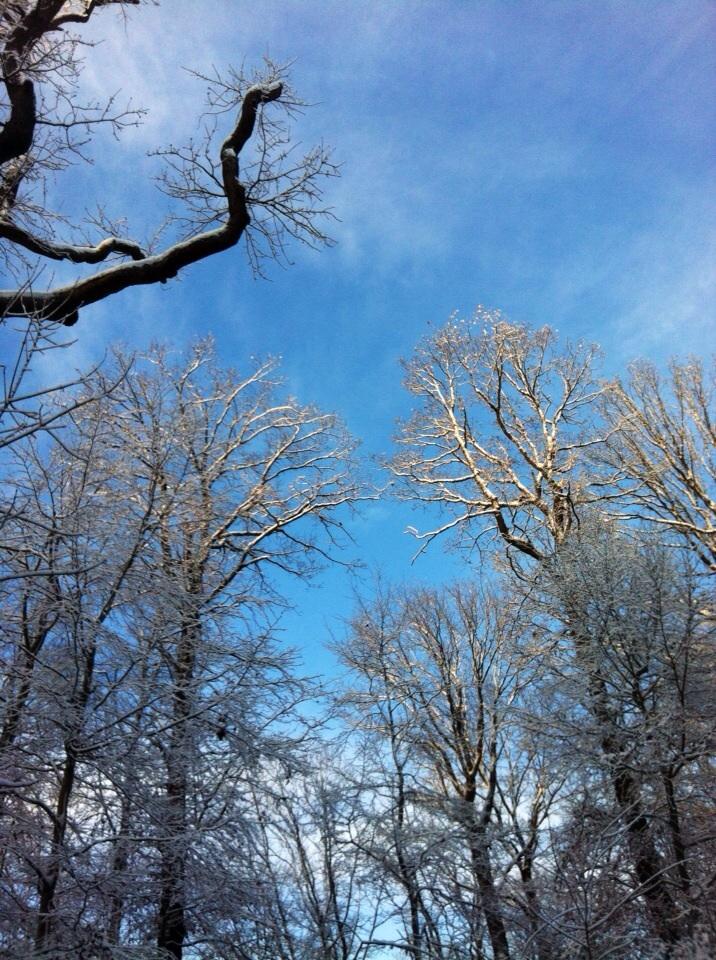 #Wald; #Frühling; #Achtsamkeit; #Fasten; #Fastenzeit