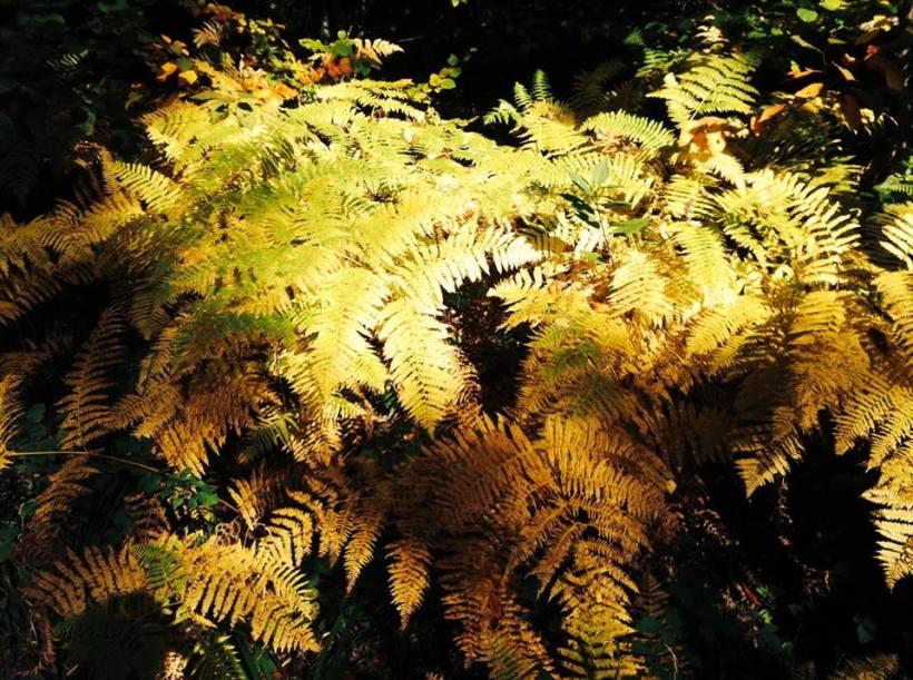 #Herbst; #Herbstfarben; #Kürbis; #Rezepte; #Kürbisrezepte